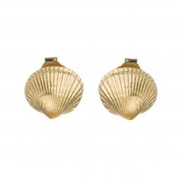 Ohrstecker Muschel gold